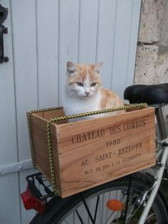 """ Whys don't de just make a sign dat says,    ' Cat in Crate ' """