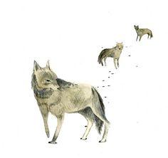 Julie Morstad, Wolf