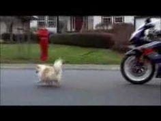 La imagen es sexista también de forma explícita, con estereotipos de hombre motorista que no se preocupa del perro, y de mujer que se queda en casa, pero...