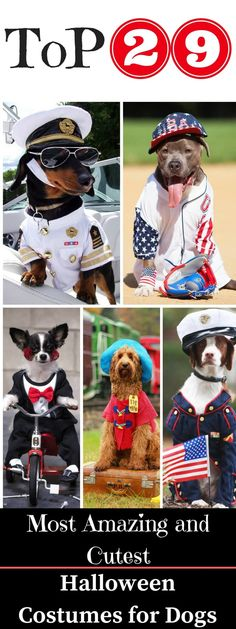 All styles of dog costumes for small dogs and large dogs.Celebrate Halloween with the coolest, funniest, most entertaining dog costumes on the planet!