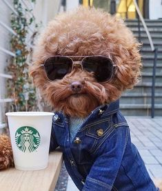 Best dogs and puppies breeds animals ideas Baby Animals, Funny Animals, Cute Animals, Smiling Animals, Animal Jokes, Funny Dog Memes, Funny Dogs, Funny Kitties, Grumpy Cats