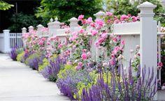 fenceline landscaping ideas | The Fence Line: Fence Landscaping Ideas: Create Your Backyard Oasis