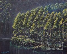 Forest Reflections by Caroline Street Welcome To The Group, Framed Prints, Canvas Prints, Wood Print, Landscape Art, Oil On Canvas, Reflection, My Arts, Street View