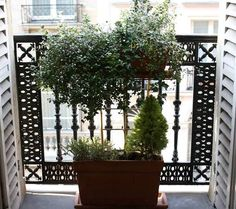 Example of a compact garden for balcony. Thank goodness I do have more space than this!