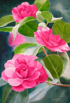 Rose Colored Camellia Original Watercolor Painting