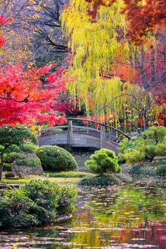 Puente de la luna en los jardines japoneses