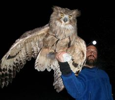 This guy had to get in the shot!!--This is one of the largest species of OWL--The Eurasian Owl
