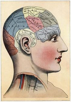 Foods and Herbs for Pineal Gland Health