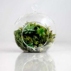 i would love to have a beautiful terrarium (or two) to have in my apt. :)