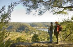 Medium difficulty Old Great North Road – World Heritage walk highlights a historic convict-built road with scenic river views, via Finchs Line, in Dharug National Park. Great North, Things To Do, National Parks, Walking, River, Mountains, World, Things To Make, Walks