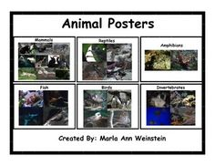 Animal Posters includes a poster of mammals, reptiles, amphibians, birds, fish, and invertebrates. These posters are GREAT for all ages! FYI: You can earn credits to use at various TPT stores by providing feedback for purchased products.  Please click the star at the top of the page to follow me if you would like notification when I post a new product.
