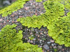 lichen love Maine!