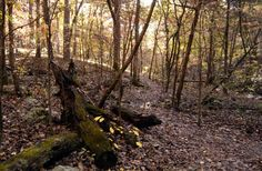 Bear Hollow Natural Area – Arkansas Natural Area