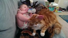 Baby and Kitty  http://thewiseserpent.blogspot.com/2015/12/lost-cat-found-cat.html