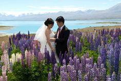 Lupin Flower Wedding at Lake Tekapo http://weddingsnewzealand.com