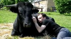 Christophe Thomas and his bull Fadjen Brave, Friendship, Google, Taurus, Animals, Death, Cuddling, People