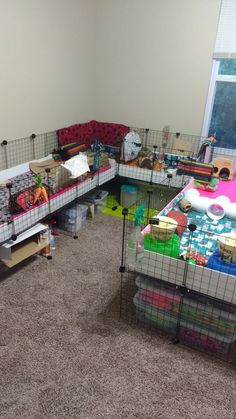 """Large guinea pig C&C cage where 6 guinea pigs lived. Left wall section was grids. The right side was grids and both were connected to a grid section which was used as a """"kitchen"""". Most fleece bedding made by hand. Diy Guinea Pig Cage, Guinea Pig House, Pet Guinea Pigs, Guinea Pig Care, Bunny Cages, Rabbit Cages, Bunny Supplies, C&c Cage, Bunny Room"""