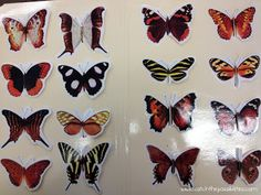 Butterfly Matching at Catch the Possibilities