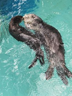River and sea otters :)