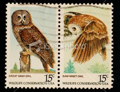 2 of 4 Wildlife Conservation Stamps with Owls - United States