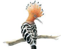 Greeting Card Upupa carta quadrato carta carta ebraico bellissimo uccello animale artistico carta di carta fatta a mano dell'acquerello animale arte per bambini