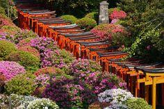"""見逃したくない名所が東京の下町に!幾重にも連なる鳥居が美しい""""根津神社""""   SELECTY"""