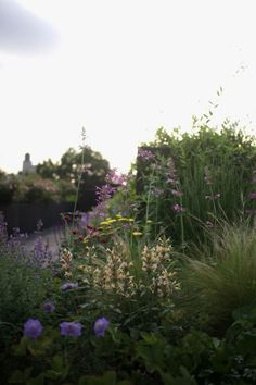 Julie Farris Brooklyn Rooftop Garden, Photograph by Sophia Moreno-Bunge
