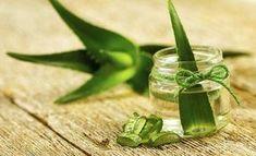 (Grow Aloe Vera at home - translate from Swedish) Aloe vera har fantastiska egenskaper och kan med fördel odlas i ditt eget hem. Den behöver väldigt lite vård och växer snabbt.