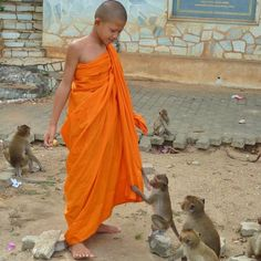 Young monk plays with monkeys in Thailand. I really want to go to Thailand and see these types of scenes. Have you been to Thailand? What did you like best?