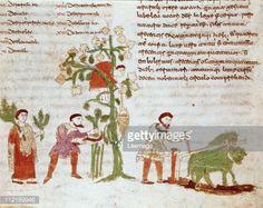 Fine art : Grape Harvest. Miniature from De Universo (De Rerum Naturis), by Rabanus Maurus Magnentius a.k.a Rabanus Maurus (c.780_856). 9th century. Archives of the Abbey of Montecassino, Montecassino, Italy