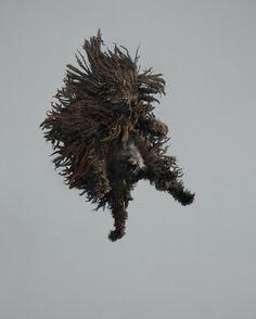 chien-saut-03