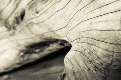 bark tree - texture of bark tree