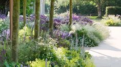 Soft perennial planting - purples and lime greens - Marcus Barnett - Landscape and Garden Design Purple Garden, Love Garden, Dream Garden, Farmhouse Landscaping, Landscaping Plants, Landscaping Ideas, Plant Design, Garden Design, Front Gardens