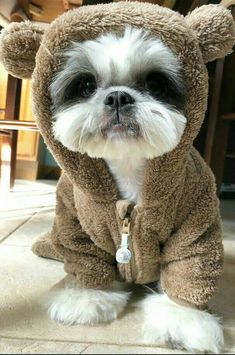 Best dogs and puppies shih tzu baby Ideas Really Cute Puppies, Cute Dogs And Puppies, Baby Dogs, Doggies, Cutest Dogs, Cute Funny Animals, Cute Baby Animals, Animals And Pets, Sweet Dogs