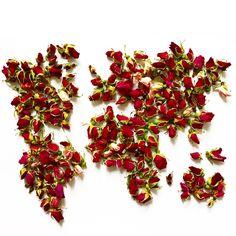 world of rose