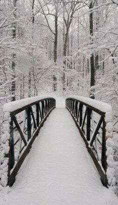 snowy bridge in the woods