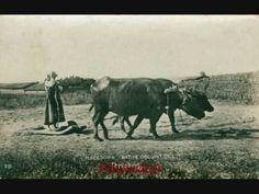 Στιγμές από την καθημερινή ζωή στη Μακεδονία Moose Art, Seeds, Bread, Animals, Animaux, Breads, Animal, Animales, Grains