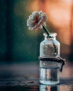 #instagood #life #luxury #tbt #زیبا  #portrait #model #mode #لاکچری #منظره #bleachmyfilm #عشق #featurepalette#tangledinfilm #عکاسی #عکس #rsa_portraits #discoverportrait#expofilm #createcommune #top_portraits#folkportraits #instagram_faces #موفقیت #portraitstyles_gf #portrait_vision  #natgeofirsts #natgeo #جذاب #زیبایی Still Life Photography, Amazing Photography, Nature Photography, Anime Flower, Picture Writing Prompts, Image Fun, Bottle Charms, Krishna Wallpaper, Mini Bottles