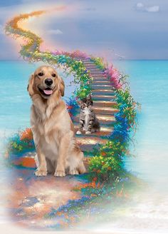 In loving memory of our wonderful friends who have crossed The rainbow bridge ...... I'm so sorry we failed you sweethearts