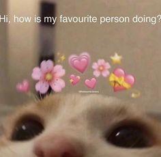 Omg send this to ur favorite person 🥺 👉🏻👈🏻 cr ---tags--- Cute Cat Memes, Cute Animal Memes, Cute Love Memes, Stupid Funny Memes, Funny Relatable Memes, Funny Animals, Bf Memes, Freaky Memes, Flirty Memes