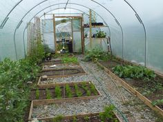 After 2 years we are starting to get the hang of the polytunnel