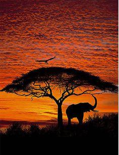 African Sunset 4-501 Wall Mural by Komar