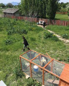 Family doing their farm things. Tending to the chickens and letting the bunnies graze! #geminiseason #boyfriend #paleoliving #healthyliving #paleo #fitness #wholefoods #goraw #retrogirl #animallover #bettiebangs #apartmentliving #pinupgirl #ratties #Arizona #animalsofinsta #logan #utah #farm #animals #bunnies #kitties #bees #chickens #gym by kennapenguin