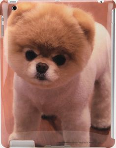 BOO THE WORLD'S CUTEST DOG IPAD CASE at Shop Jeen | SHOP JEEN