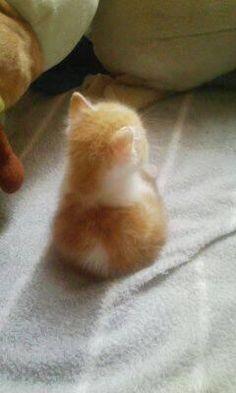 【画像あり】 どう見ても天使にしか見えない子猫が激写される : アルファルファモザイク