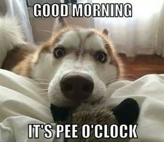 Dog good morning it's pee o'clock