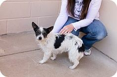 McKinney, TX - Terrier (Unknown Type, Small) Mix. Meet Strawberry a Dog for Adoption. Awww sweet baby!