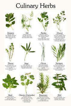 Plant Spotlight: kitchen herb garden   jardin d'herbes aromatiques