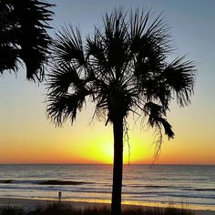53 Best Myrtle Beach Camping Images Beach Camping