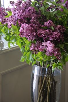lilac, one of my favorite flower.